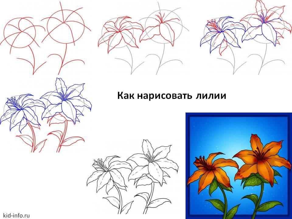Лилии схема рисования