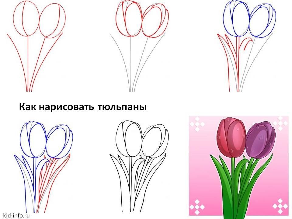 Как нарисовать цветок тюльпан