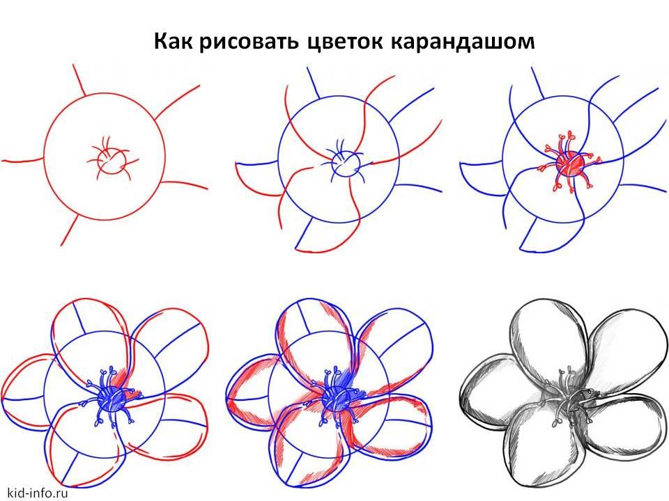 Как рисовать цветок карандашом