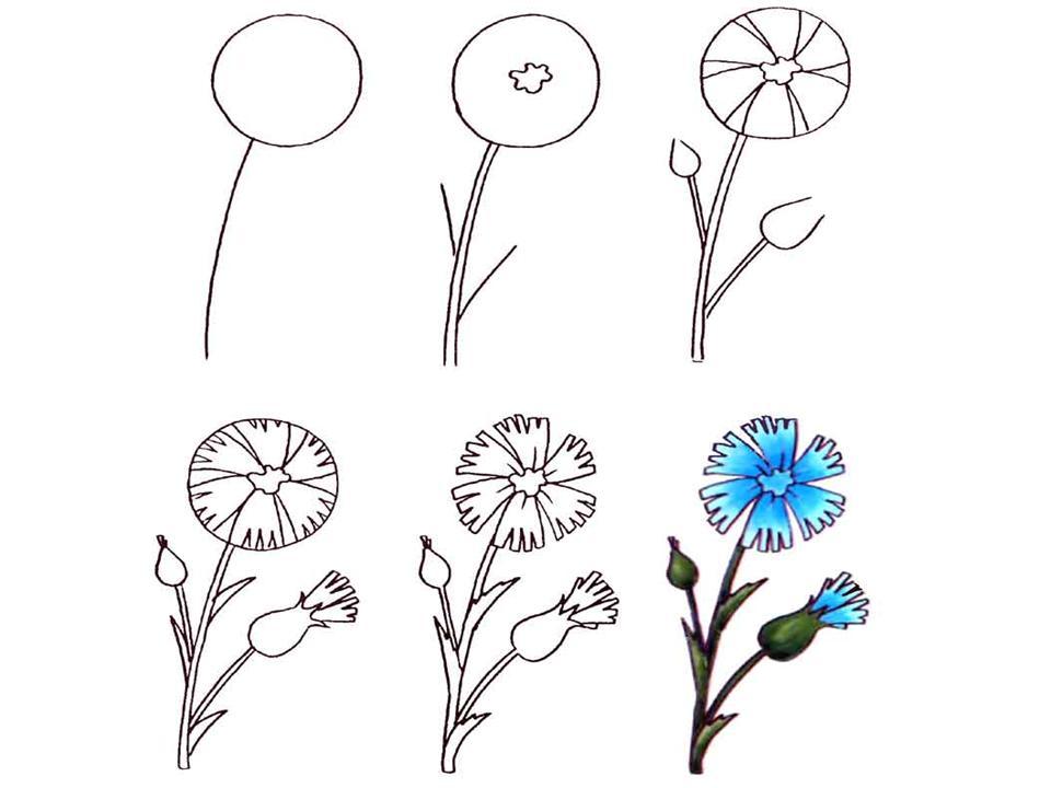 Рисунки цветов поэтапно
