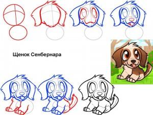 Как нарисовать щенка Сенбернара