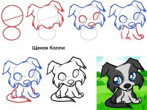 Как нарисовать щенка Колли
