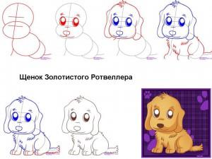Как нарисовать щенка Ретривера