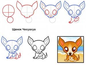 Как нарисовать щенка Чихуахуа