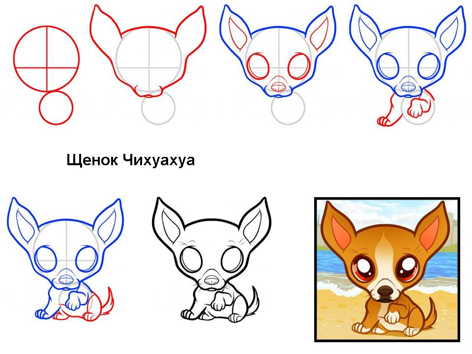 рисунки карандашом чихуахуа: