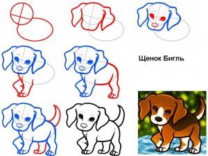 Как нарисовать щенка Бигля