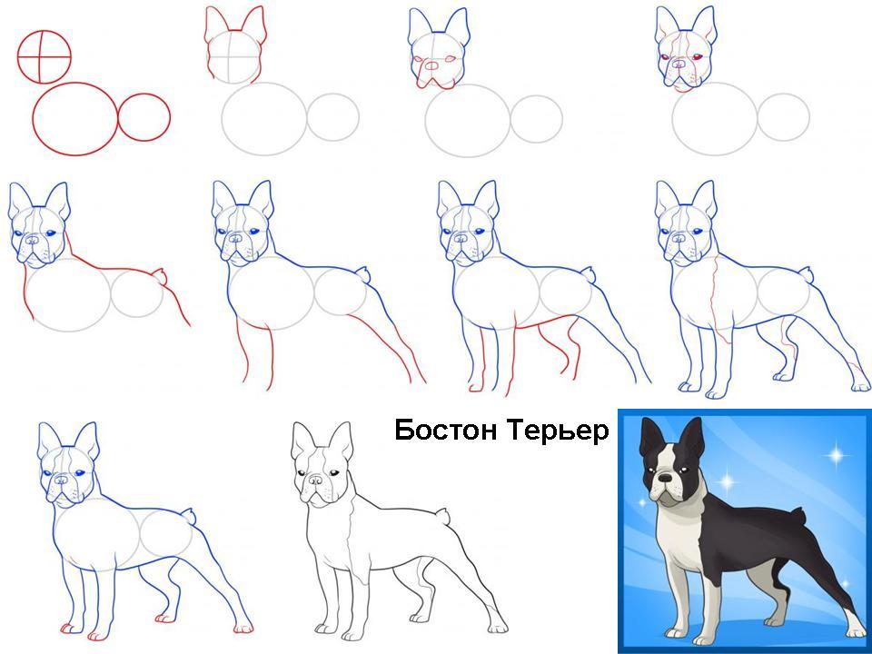 Как научить собаку