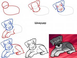 Как нарисовать лежащую собаку (шнауцер)