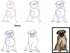 Как нарисовать собаку Мопс