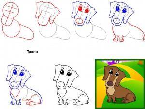 Как нарисовать собаку Такса