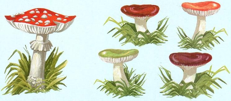Картинки грибов для детей нарисованные цветные - 81c