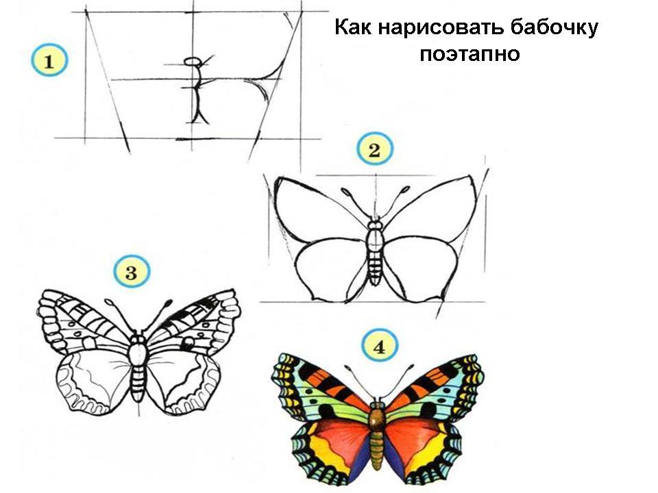 Поэтапно нарисовано бабочек