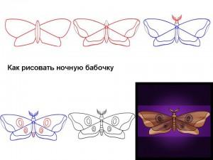 Как рисовать ночную бабочку
