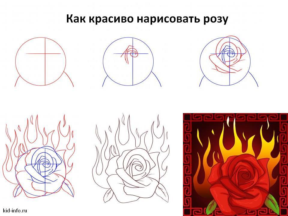 Как красиво нарисовать розу