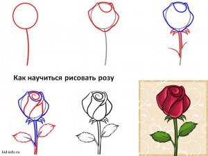 Как научиться рисовать розу