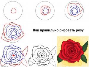 Как правильно рисовать розу