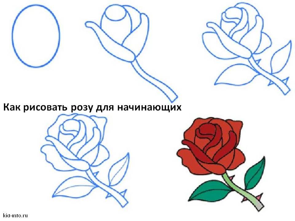 Рисуем розы карандашом для начинающих поэтапно картинки