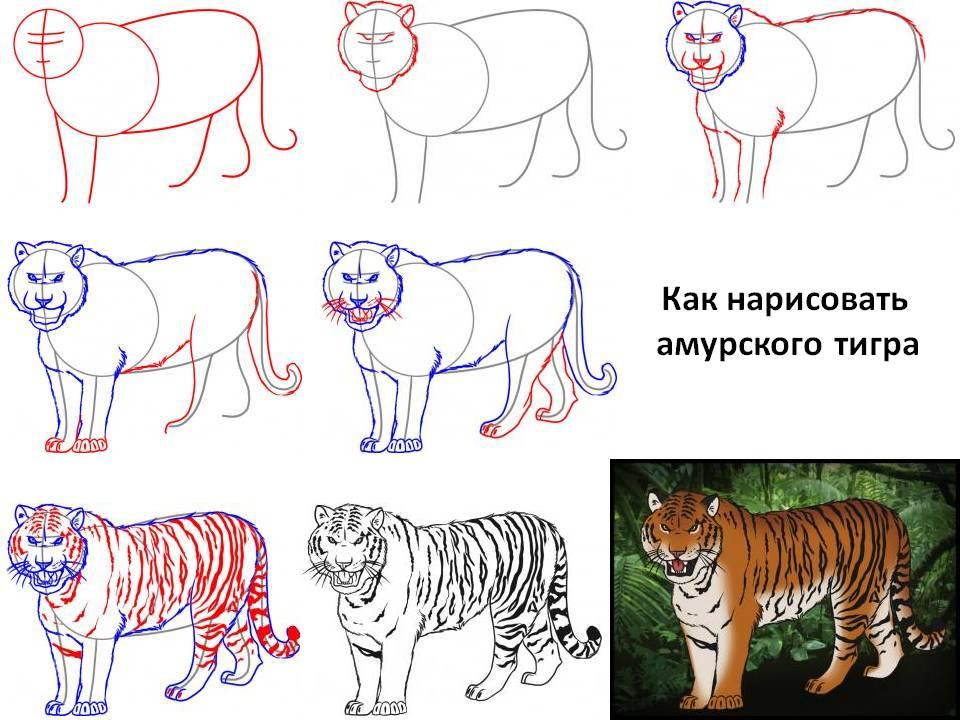 Легко рисуемый тигр