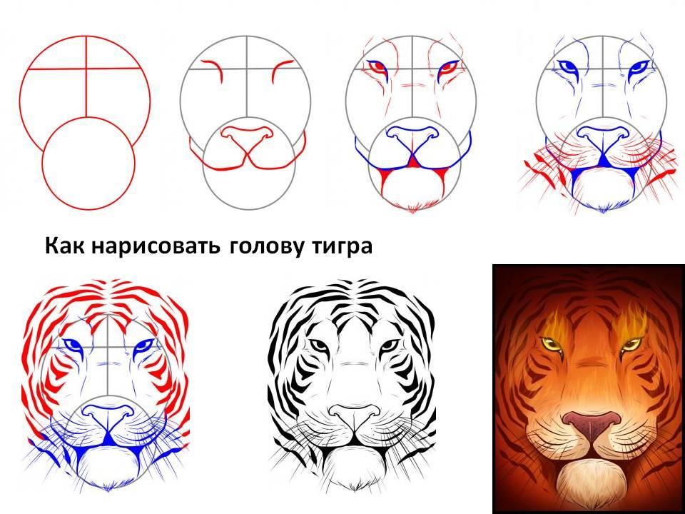 Рисовать для начинающих тигр