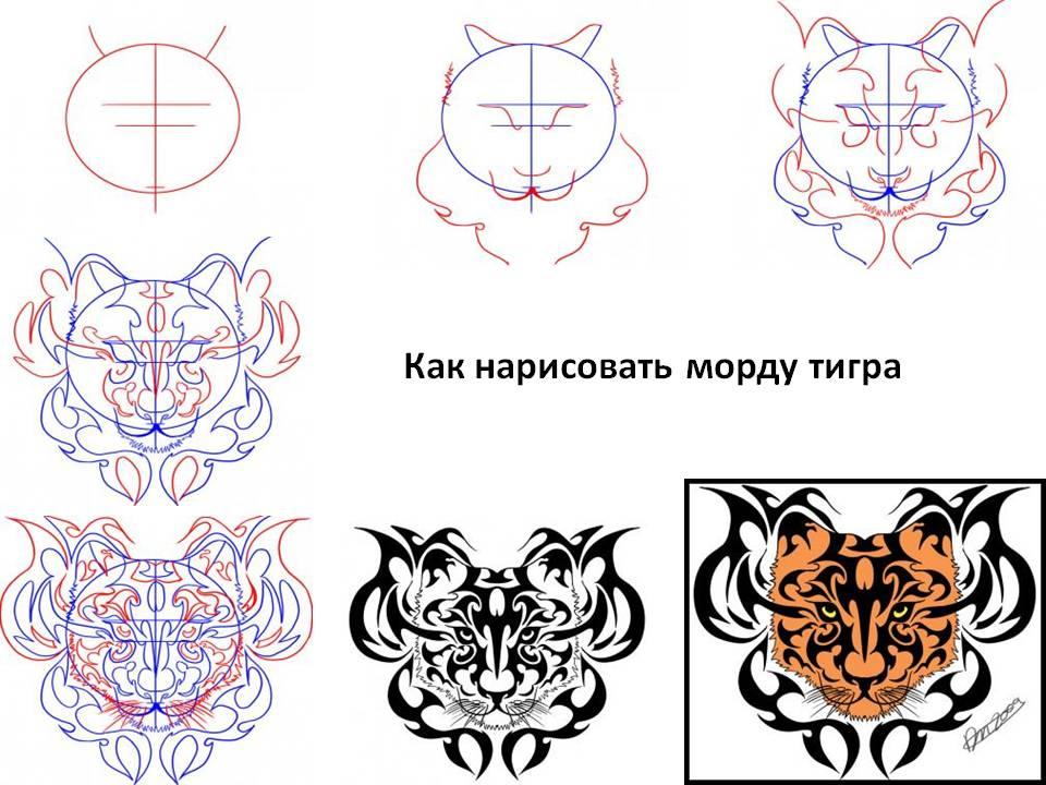 Морду тигра нарисовать