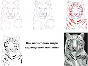 Как нарисовать тигра карандашом поэтапно