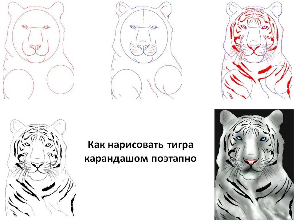 Как нарисовать тигра схемы