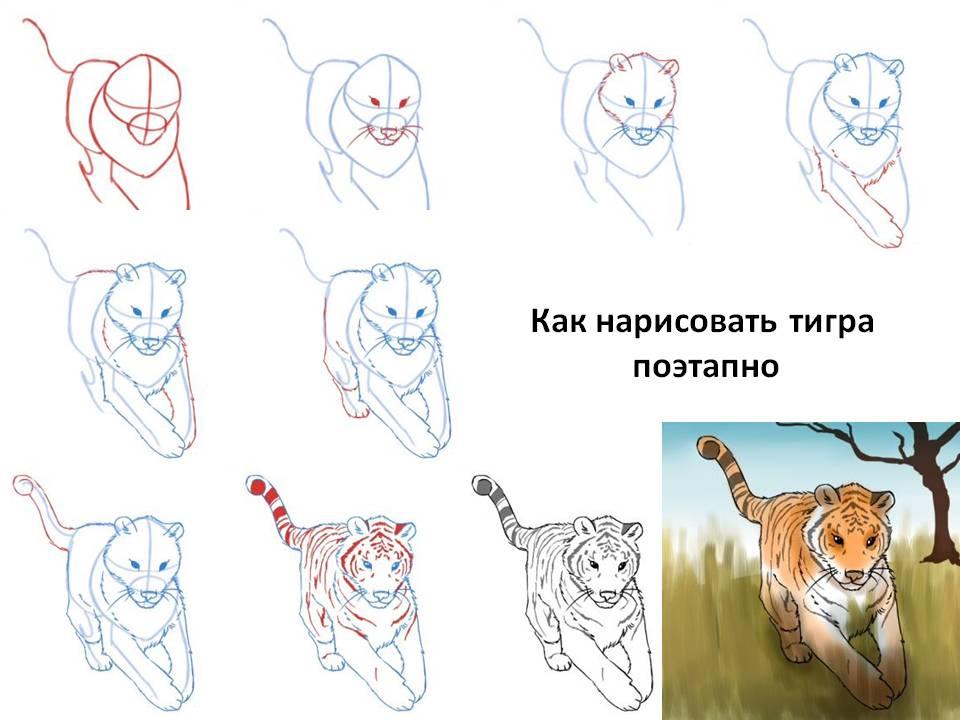 Как рисовать животных пошагово