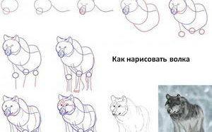 kak-narisovat-volka