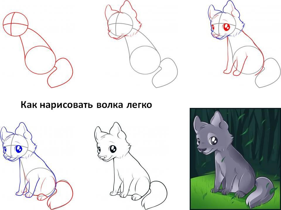 Как нарисовать волка легко
