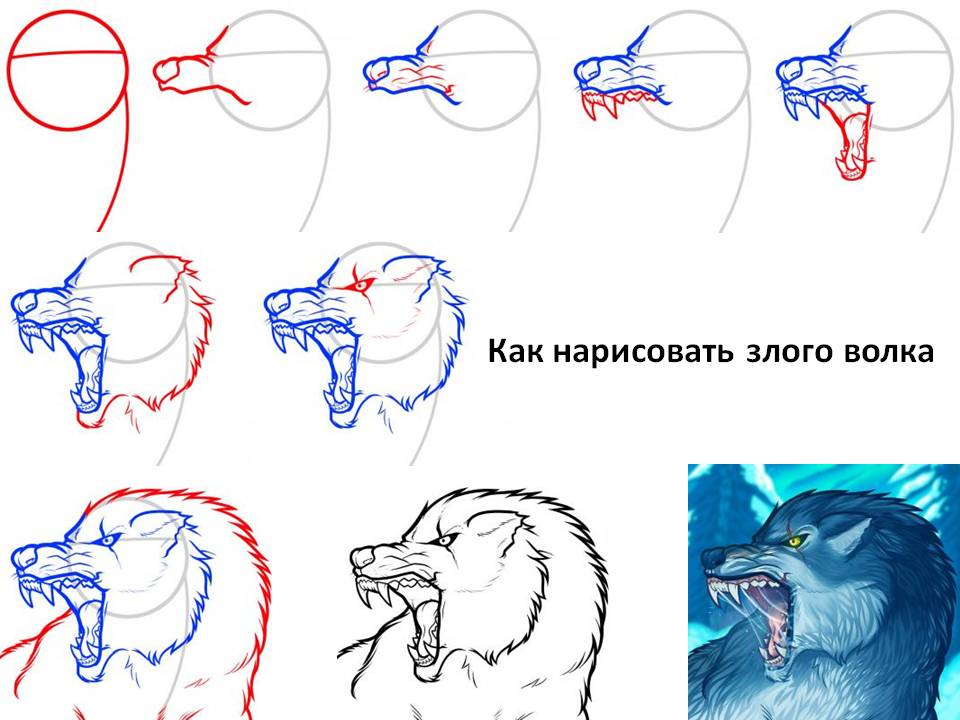 Как нарисовать злого волка
