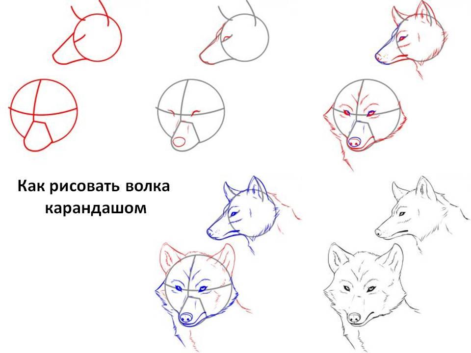 Как рисовать волка карандашом