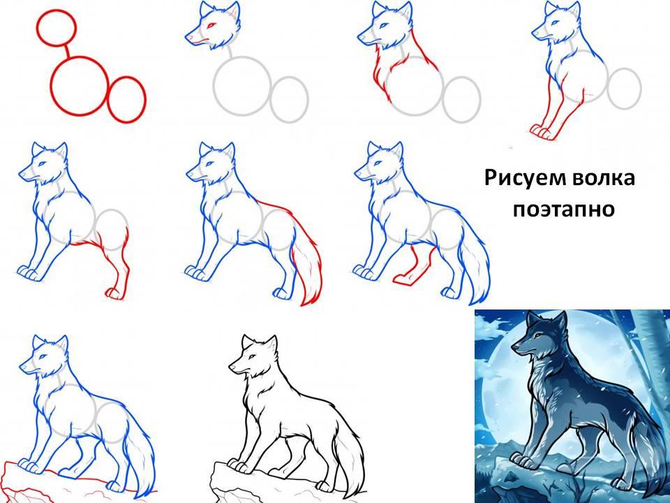 Поэтапный рисунок карандашом волк