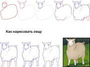 Как нарисовать овечку, барана и ягнёнка