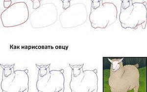 kak-narisovat-ovcu1
