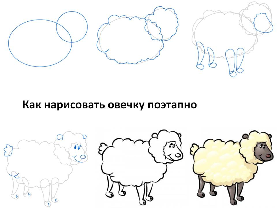 Как нарисовать овечку поэтапно