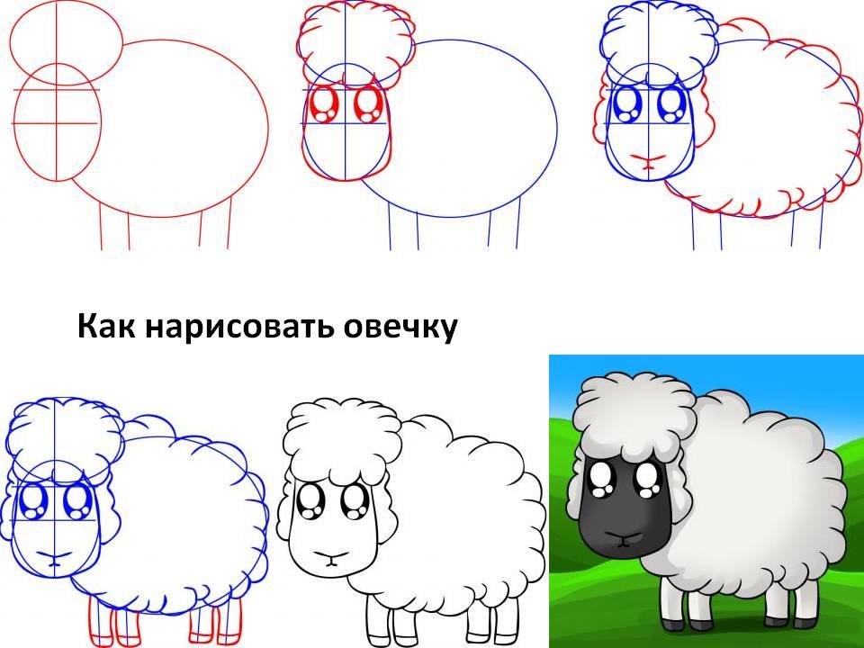 Как нарисовать овечку