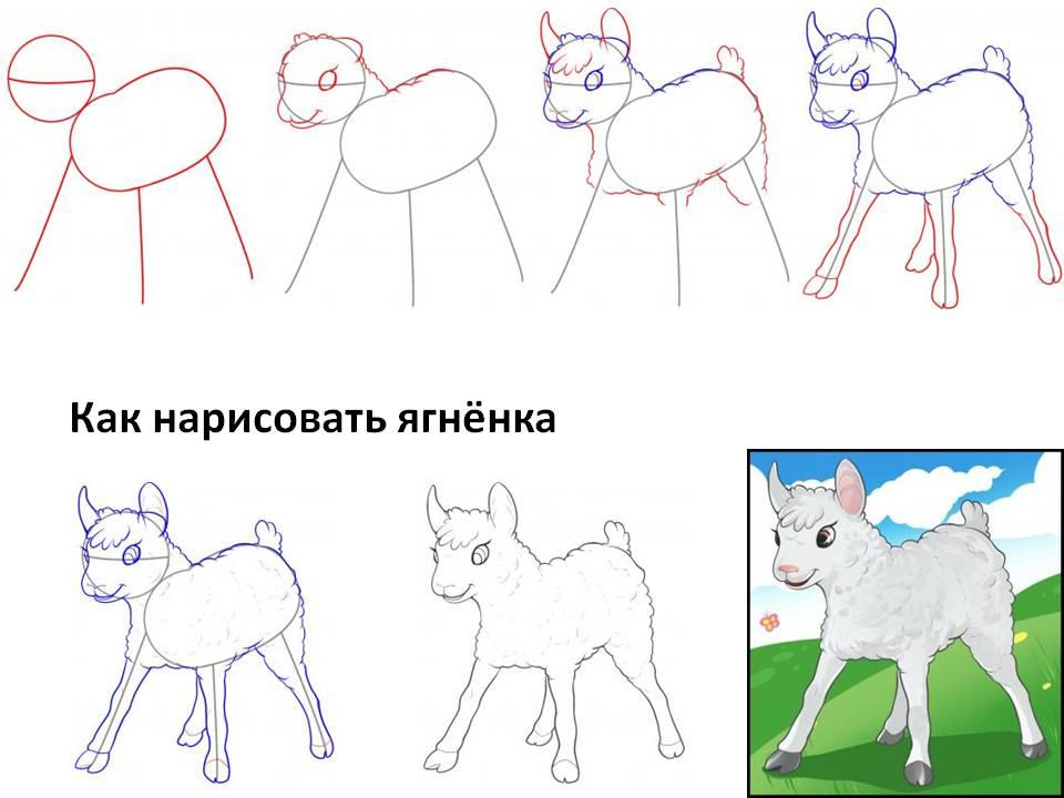 Как легко нарисовать ягнёнка