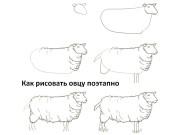 Показаны картинки по запросу Как Нарисовать Овцу Поэтапно.