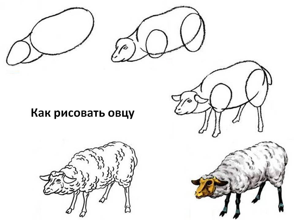 Как рисовать овцу