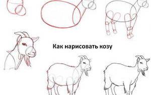 kak-narisovat-kozu-kozla-i-kozlyonka