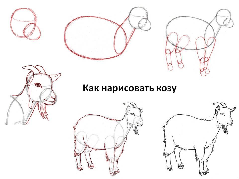 Как нарисовать казу