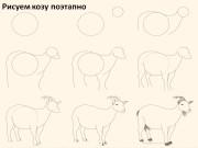 Рисуем козу поэтапно