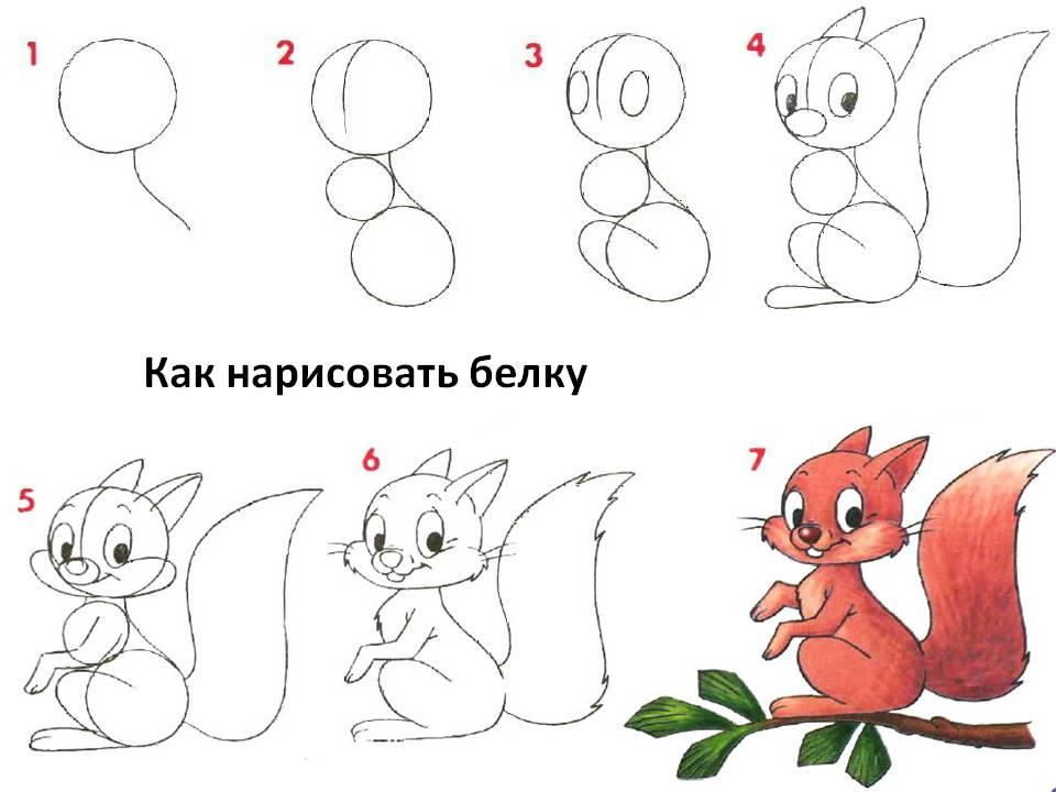 Как нарисовать белку поэтапно для карандашом