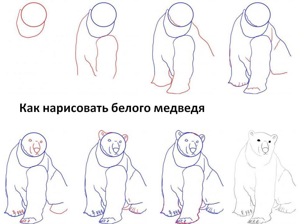 Как нарисовать медведя белого