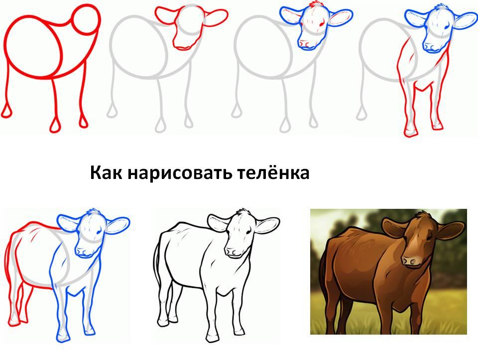 Как нарисовать телёнка