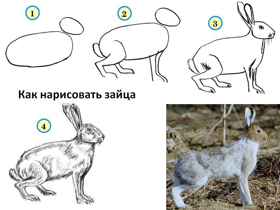 Как нарисовать зайца