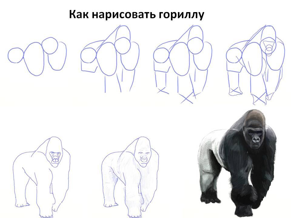 Как нарисовать гориллу