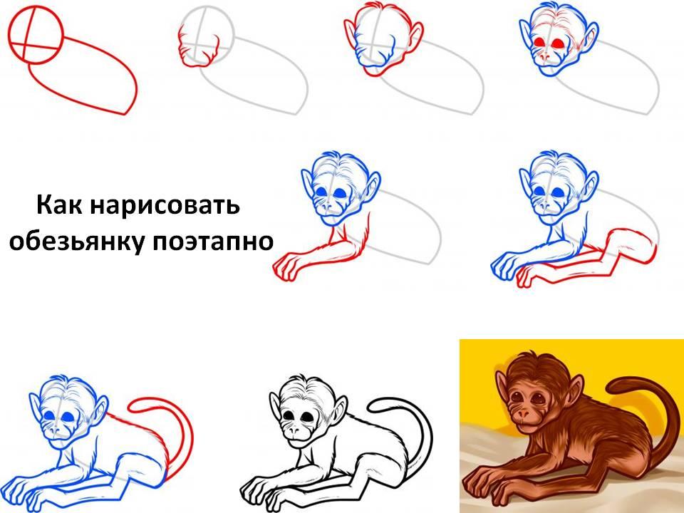 Как нарисовать обезьяну карандашом поэтапно?