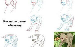kak-narisovat-obezyanu
