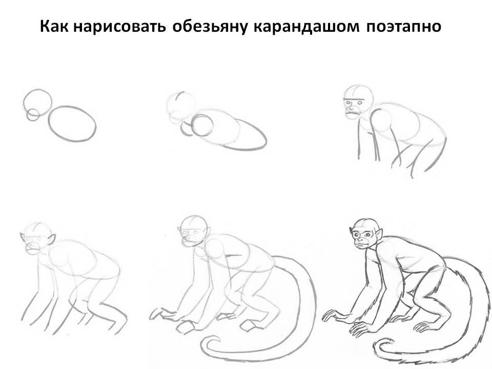 Как нарисовать обезьяну в